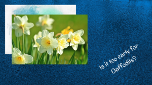 """A lady living with dementia asked 100 times, """"Is it too early for daffodils."""""""